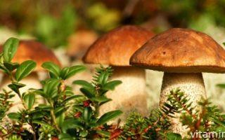 Миниатюра к статье Витамины и другие полезные вещества, содержащиеся в грибах
