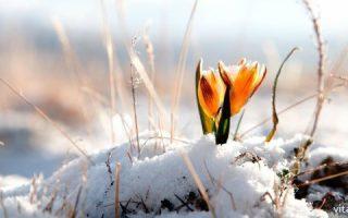 Миниатюра к статье Витамины, на которые взрослым стоит обратить внимание весной