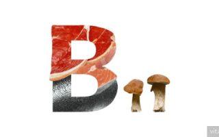 Миниатюра к статье Витамин B11: функции левокарнитина, суточная потребность и источники