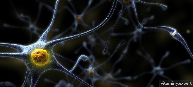 Миниатюра к статье Важные витамины для головного мозга и нервной системы