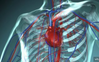 Миниатюра к статье Витамины, необходимые для сердечно-сосудистой системы